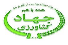 برداشت یک میلیون و 900 هزار تن انواع محصولات زراعی در زنجان