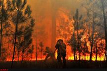 آتشسوزی در نخلستانهای محله  آبسرد بزمان  مشکل در مهار آتش به دلیل وزش باد شدید