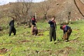 24 میلیارد ریال برای طرح های آبخیزداری کردستان هزینه می شود