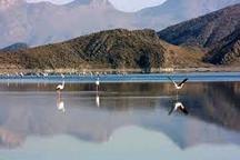 چهار هزار پرنده مهاجر میهمان دریاچه بختگان نی ریز شدند