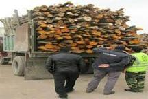 کشف مقادیری چوب آلات و اصله گرده بنه قاچاق در اردبیل