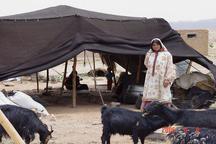 توزیع سه هزار تن جو یارانه ای برای تامین علوفه دام عشایر استان یزد