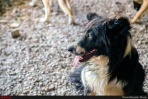 دستگیری مرد سگ آزار در آبادان