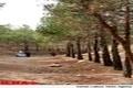 پیداشدن جسد جوان 20 ساله در پارک جنگلی یاسوج