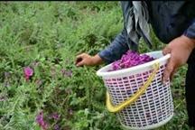 توسعه تولید و فروش گیاهان دارویی با تسهیلات اشتغالزایی
