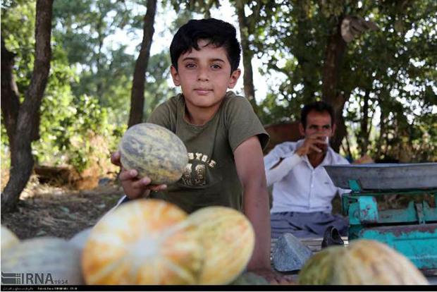 گرمک، نان آور 1200 خانواده کردستانی است