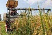 مزارع اردبیل در سلامت کامل هستند تولید 1.5 میلیون تن محصول در پارسآباد