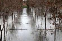 خسارت دو هزار و 540 میلیارد ریالی سیل به بخش کشاورزی آذربایجان شرقی