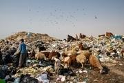 آنچه باید درباره پسماند زباله بدانید