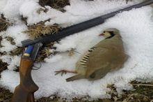 2 گروه شکارچی متخلف در منطقه شکار ممنوع خراسانلو ابهر دستگیر شدند