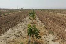 شوری خاک از دلایل حاصلخیز نبودن اراضی کشاورزی است