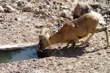 270 هزار لیتر آب در آبشخورهای حیات وحش گچساران توزیع شد