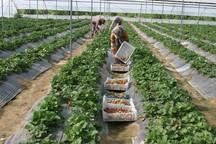 تعهد جهاد کشاورزی کرمانشاه امسال ایجاد چهار هزار شغل است