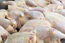 توزیع گوشت مرغ گرم در قزوین آغاز شد