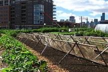 نقش کشاورزی شهری در تحول صنعت کشاورزی