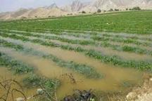 صندوق های بیمه کشاورزی برای حل مشکلات کشاورزان کمک کنند