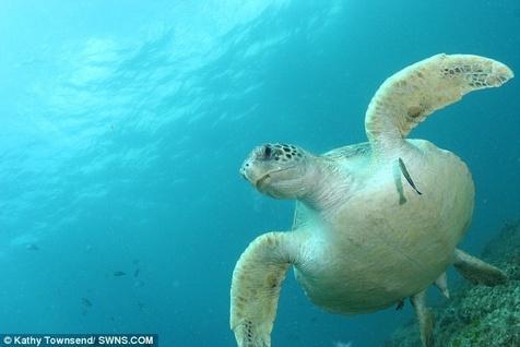 عامل مرگومیر ۴۰ درصد از لاکپشتهای دریایی شناسایی شد+ تصاویر