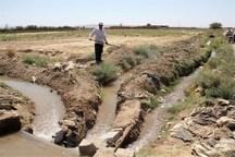 کشاورزان ابرکوه برای تغییر الگوی کشت غرقابی تلاش کنند