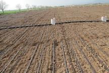 محصولات کشاورزی پلدشت تا نیمه اول سال آینده سه برابر می شود