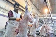 روزانه 2 تن گوشت قرمز سالم در بازار کهگیلویه توزیع میشود