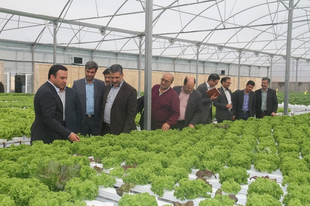 یزد رتبه دوم کشت محصول گلخانه های کشور را داراست