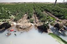 32هزار هکتار از اراضی تهران با آب های نامتعارف کشت می شود