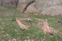 زنده گیری ۱۵ قطعه سهره طلایی توسط یک فرد متخلف در زنجان
