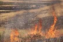 طمع عسل ، سه هکتار از مراتع میناب را به آتش کشید