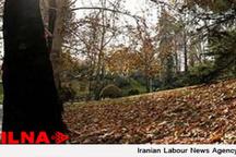 ایجاد ۶۰ هزار هکتار باغ در اراضی مستعد شیبدار