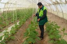 مزارع کشاورزی 138 روستای نیمروز در هفت پهنه تقسیم بندی شدند