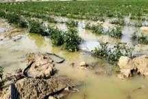 خسارت بارندگی شب گذشته در شهرستان فاروج در دست بررسی است