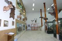بازدید رایگان از موزه تاریخ طبیعی زنجان به مناسبت روز جهانی حیات وحش