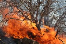17هکتار از پوشش مرتعی کوه گُرم جهرم سوخت