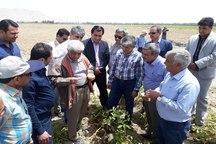 دولت درصدد رفع مشکل صادرات محصولات کشاورزی است
