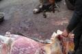 کشف گوشت الاغ از یک خودروی سواری