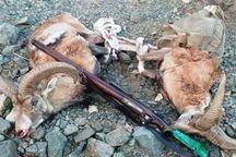 شکارچیان بزکوهی در لرستان دستگیر شدند