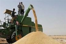 38 هزار تن گندم از کشاورزان فسا خریداری شد