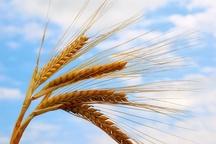 20 رقم محصول کشاورزی در اردبیل رونمایی شد