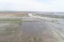 عملیات تخلیه آب از مزارع کشاورزی شعیبیه شوشتر آغاز شد