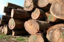 کشف 7 تن چوب جنگلی قاچاق در تنکابن