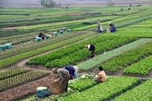 کاهش قابل توجه تغییر کاربری در اراضی کشاورزی زنجان  صدور 221 فقره مجوز تغییر کاربری مجاز در استان