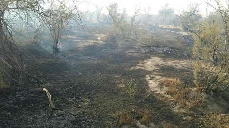 تلف شدن تعدادی از گونه های جانوری در آتش سوزی بیشه های گتوند