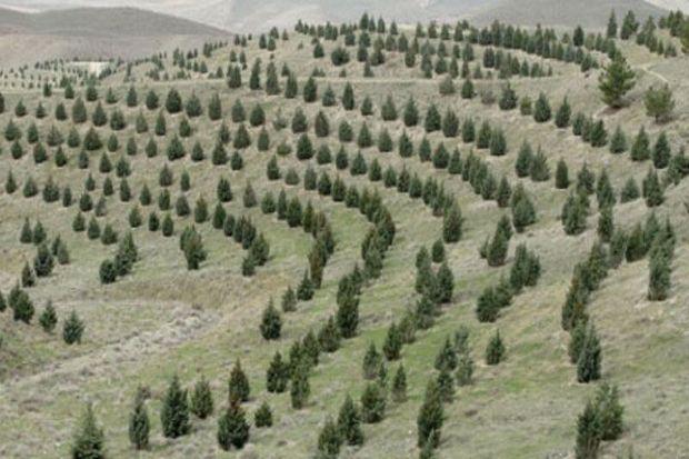 ۱۳ هزارو ۵۰۰هکتار فضای سبز  در لرستان ایجاد میشود