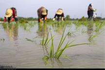 تامین آب کشاورزی در شهرستان رشت مدیریت شد