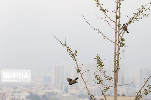 کیفیت هوای تهران برای گروههای حساس ناسالم است