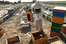 زنبورداری سهم بسزایی در ایجاد اشتغال در فسا دارد