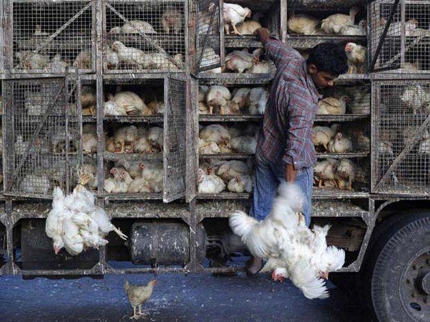 ۱۴ تن مرغ زنده قاچاق در چرداول کشف و ضبط شد