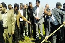 بیش از 70 درصد زراعت چوب در مازندران انجام شد