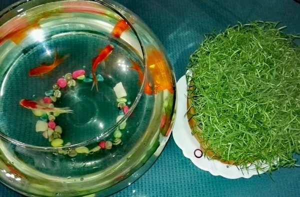 اهدای سبزه و ماهی قرمز به ازای تحویل پسماند خشک