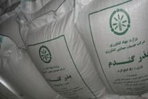 1500 تُن بذر گندم اصلاح شده در مهاباد توزیع شد